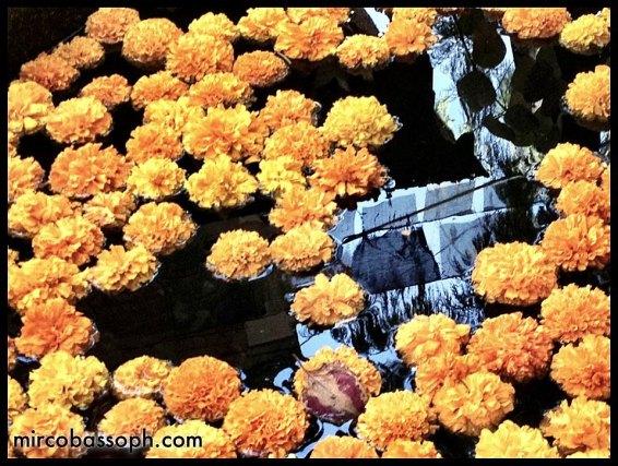 fiori e riflessi di preghiere
