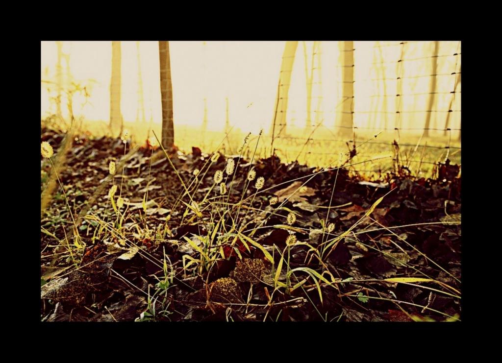20111027 jesolo autunno0012